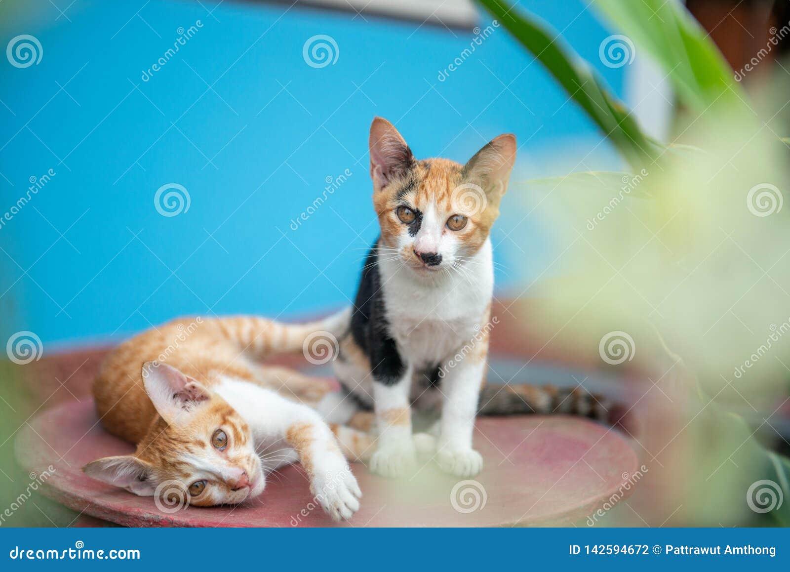Kat twee op een blauwe achtergrond