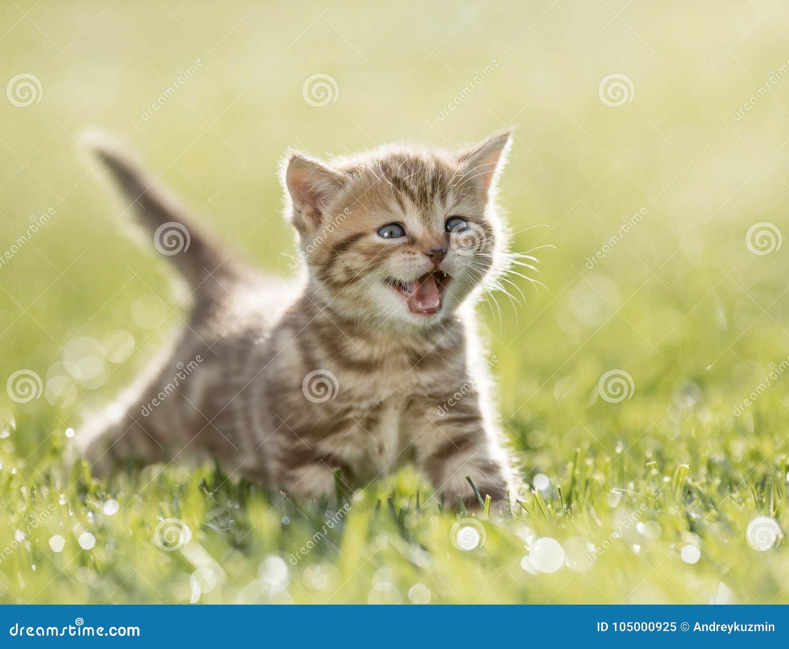 Katje die in het groene gras mauwen