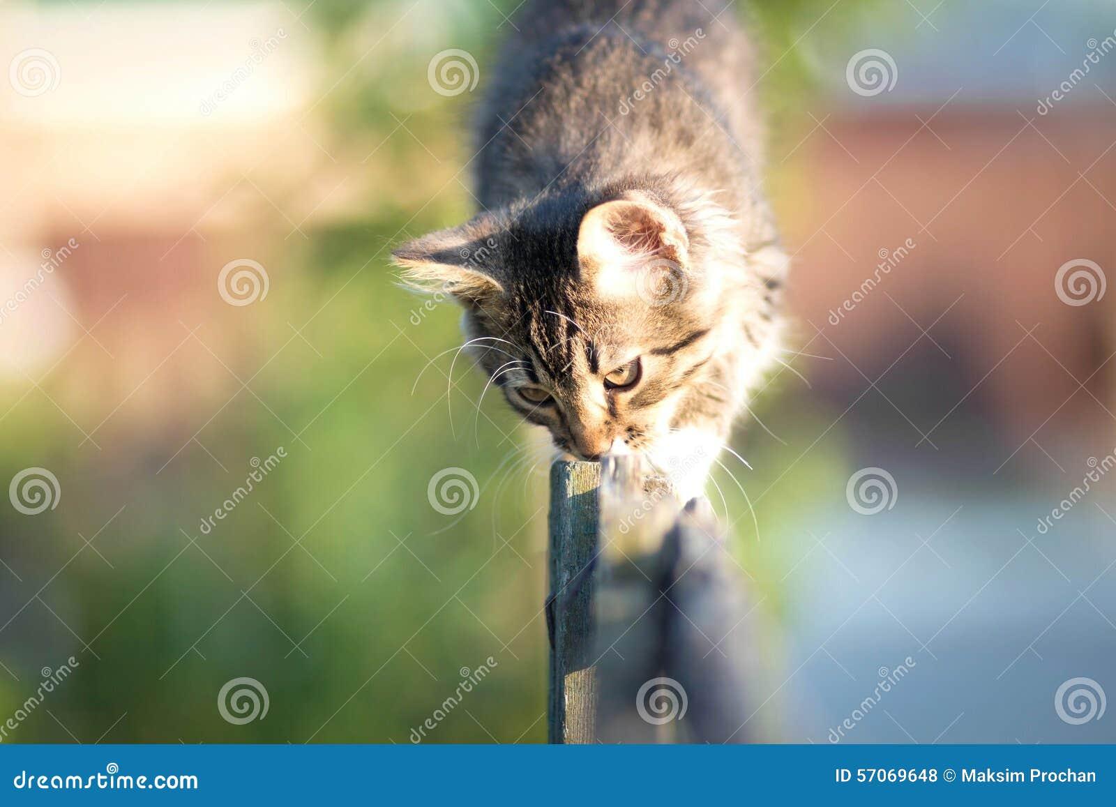 Katje die op een houten omheining lopen