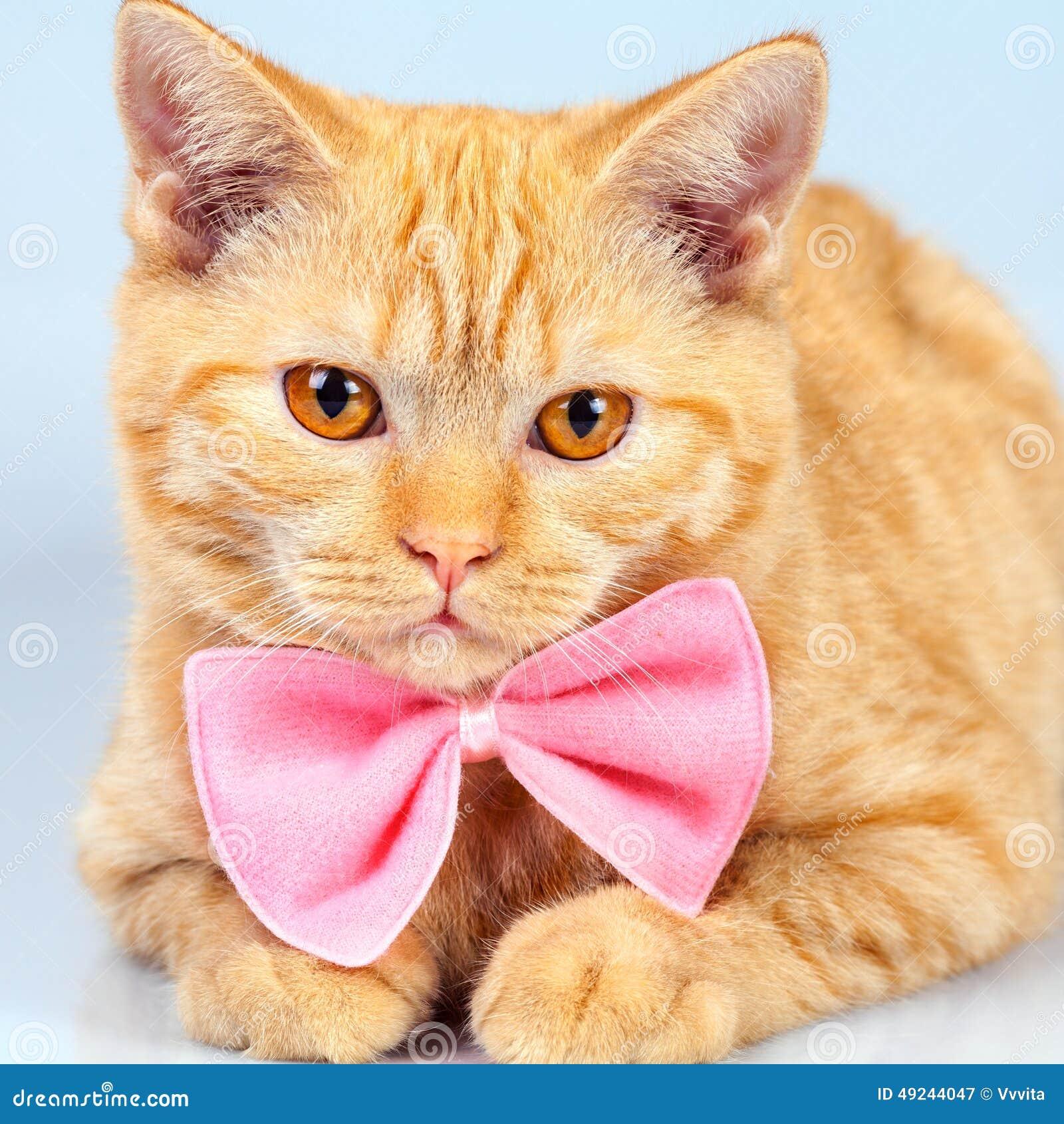 Katje die roze vlinderdas dragen