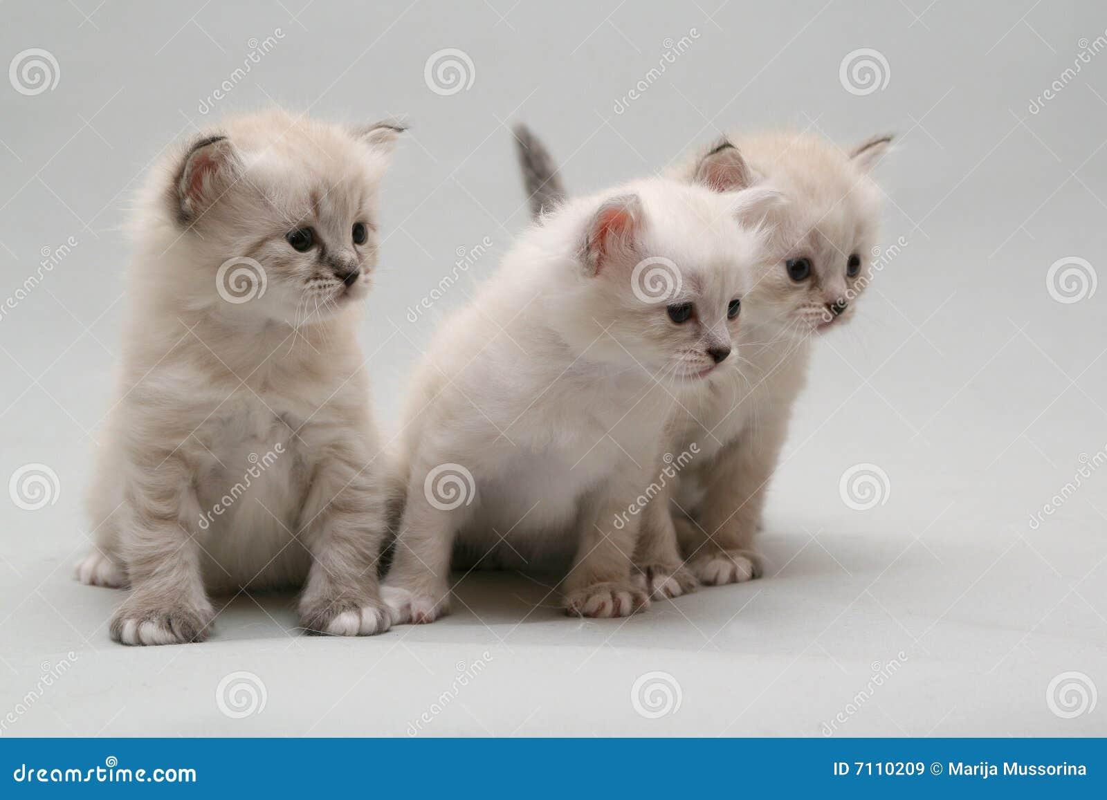 Katje drie