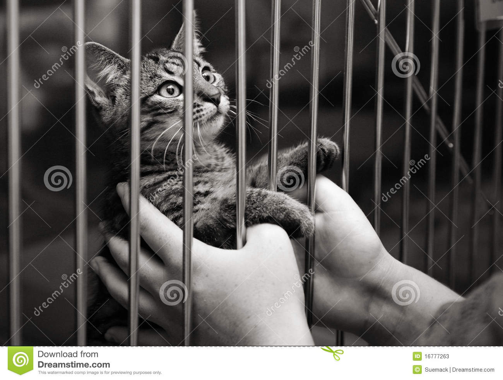 Katje in een kooi die omhoog eruit ziet