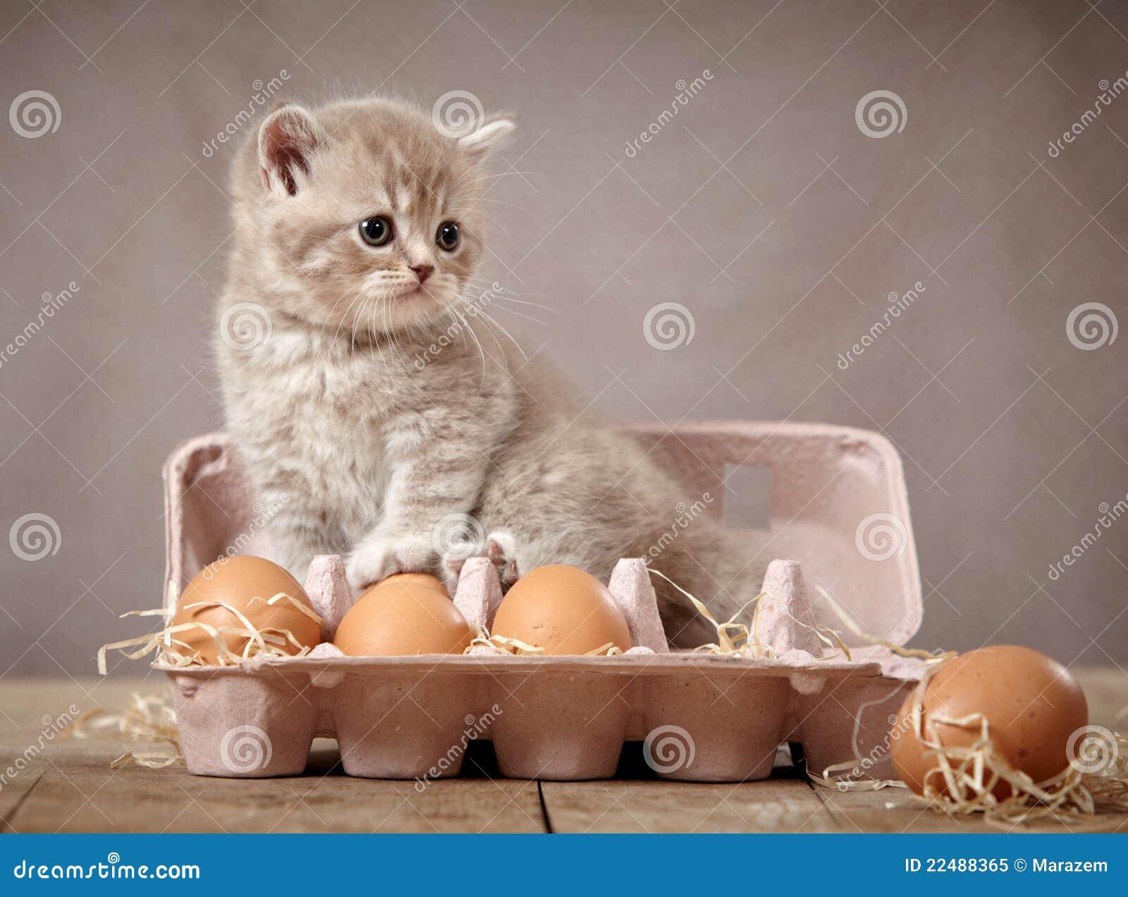 Katje en eieren