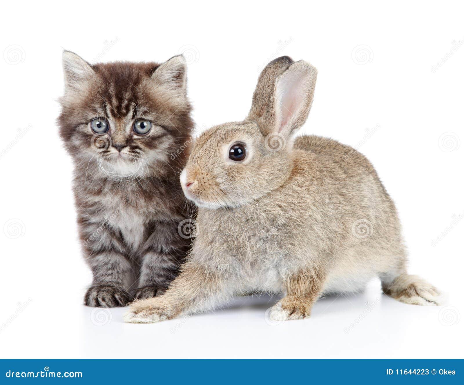 conejos chat Chat libro de visitas paginas amigas jueves, 12 de mayo de 2011 una cuarta parte de los conejos y liebres en peligro de extinciÓn.