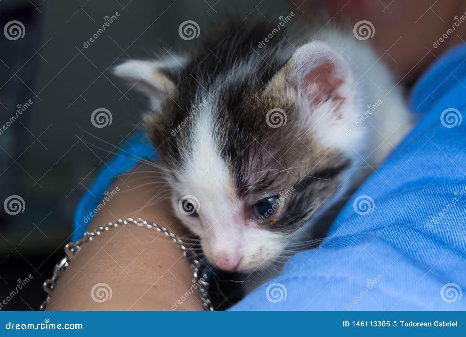 Katje met bindvliesontsteking in de handen van een dierenarts