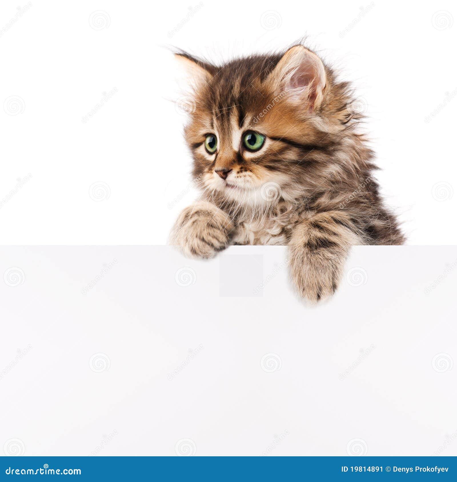 Katje met spatie