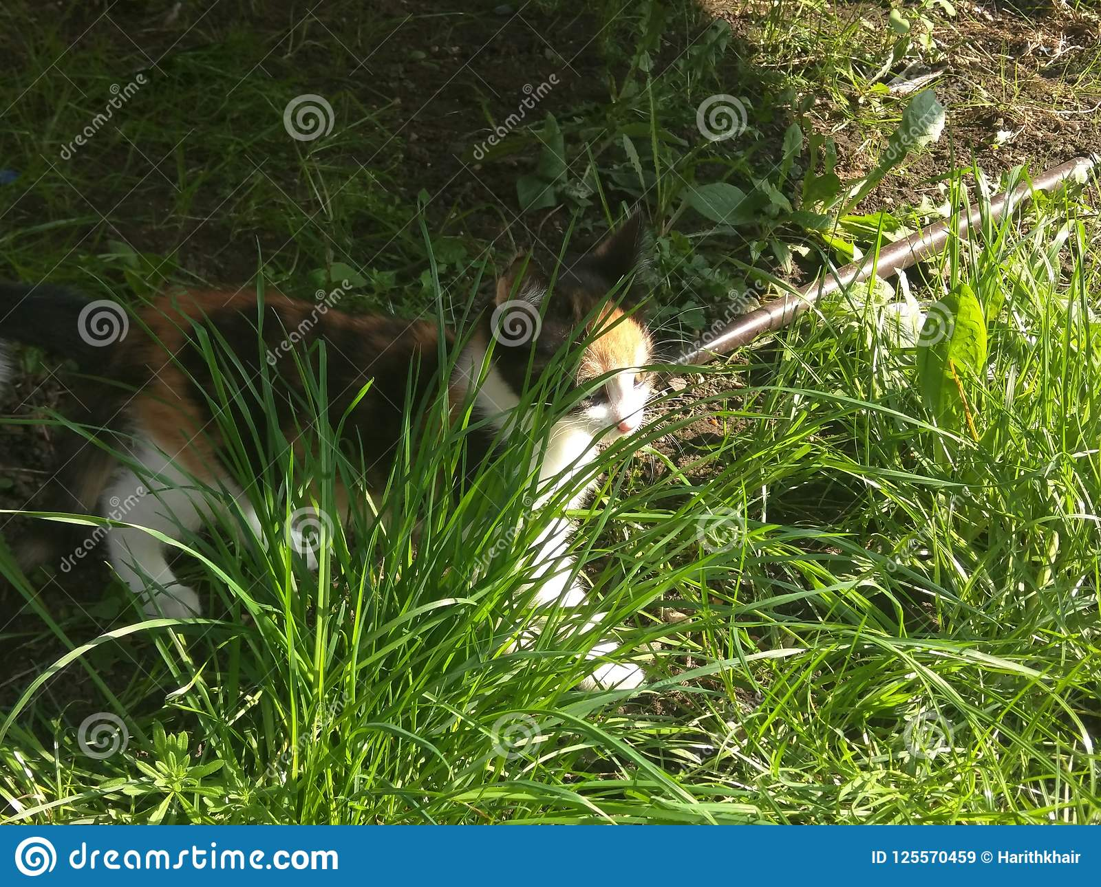 Katje onder het gras
