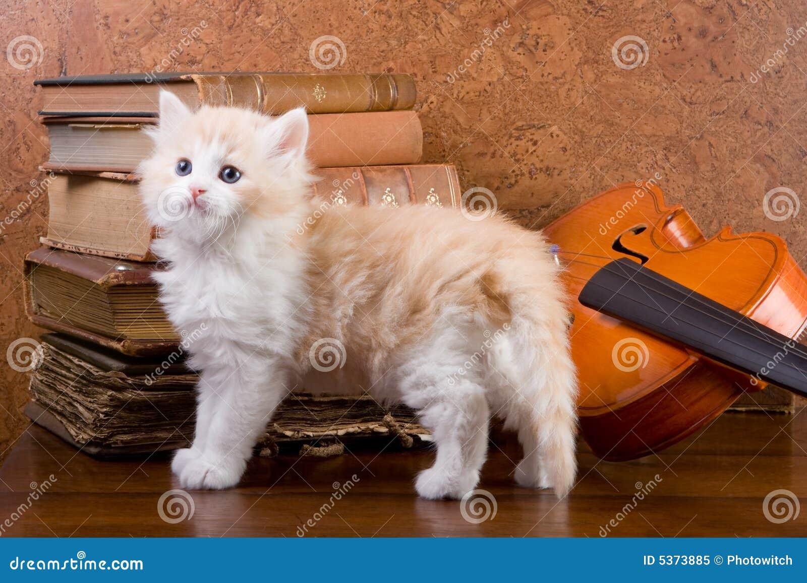 Katje op een lijst