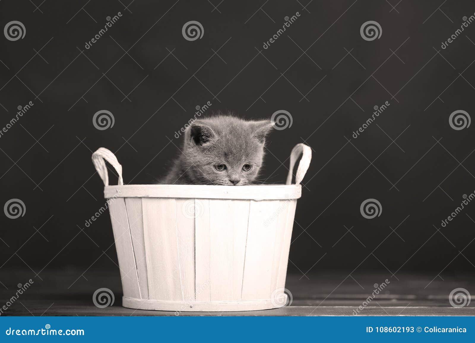 Katjes die in mand spelen