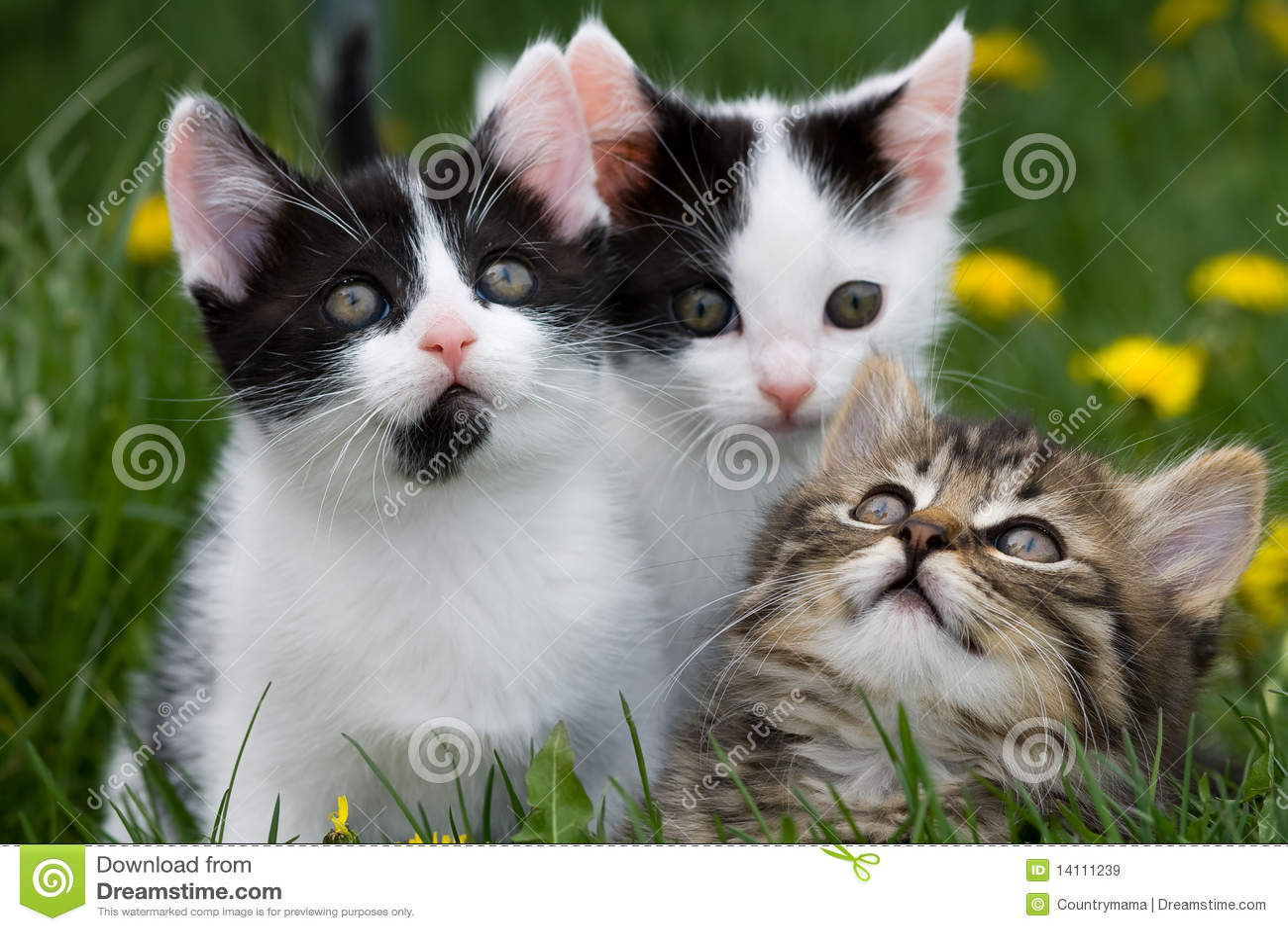 Katjes die omhoog eruit zien.