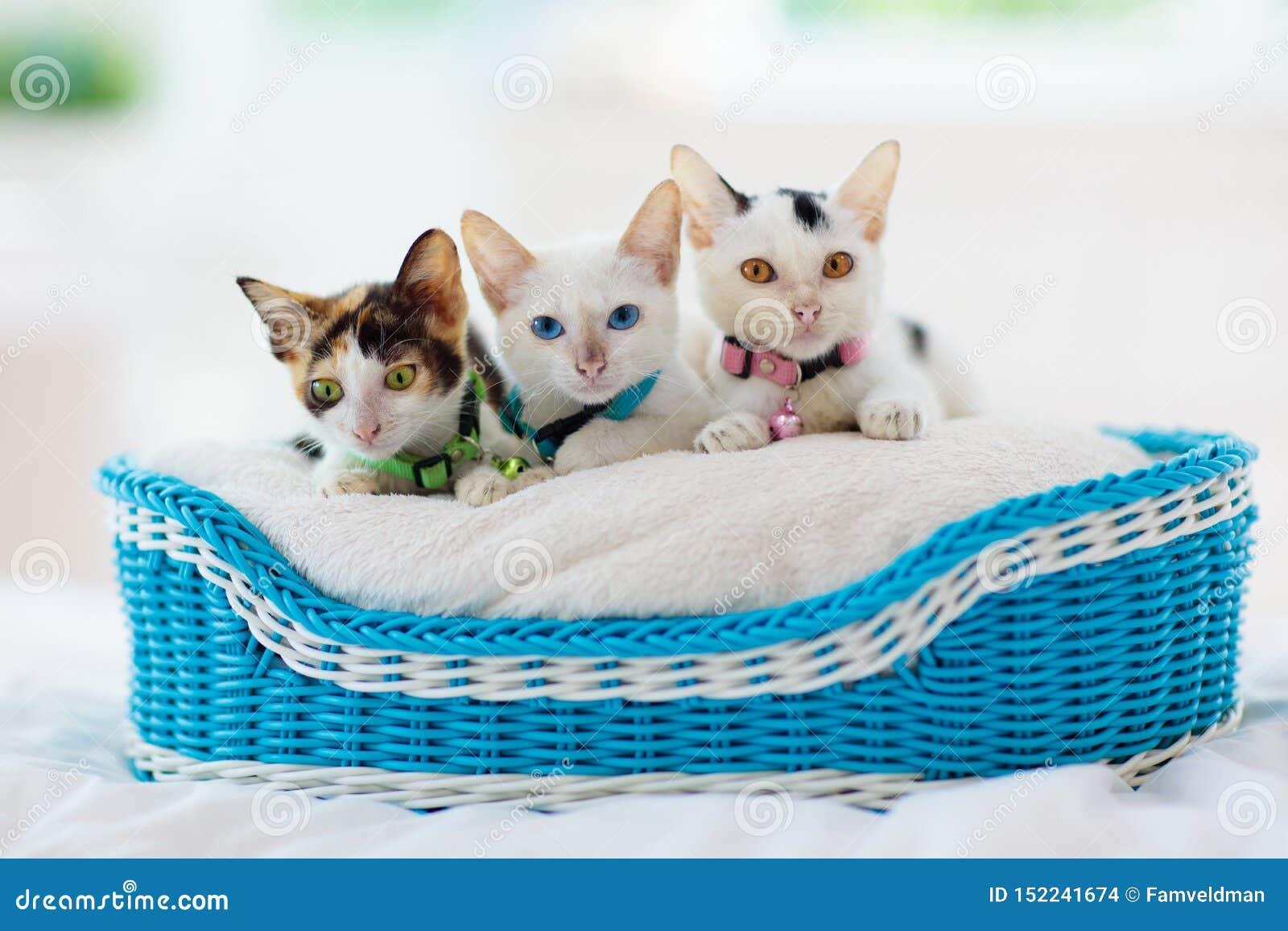 Katjes in mand Babykatten thuis Weinig Kat