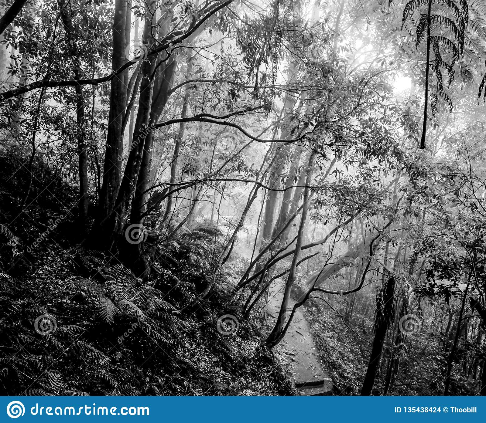 Misty rainy atmosphere Blue Mountains Katoomba National Park forest landscape day monochrome
