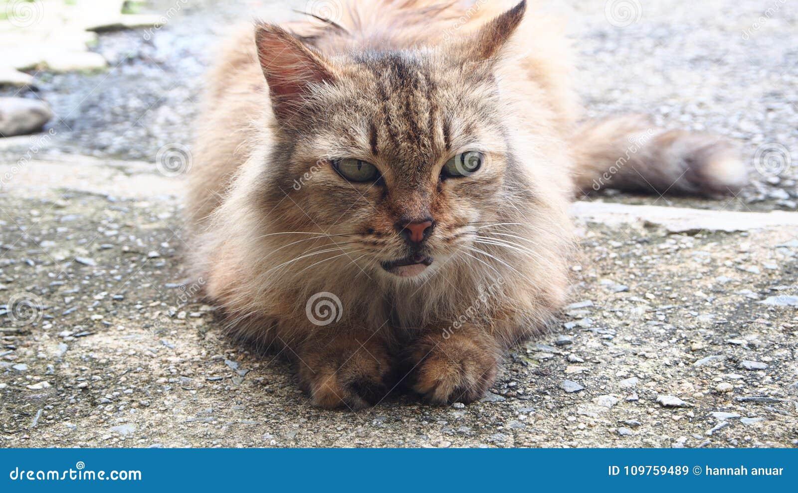Katt ögon Gräsplan Förälskelse medf8ort