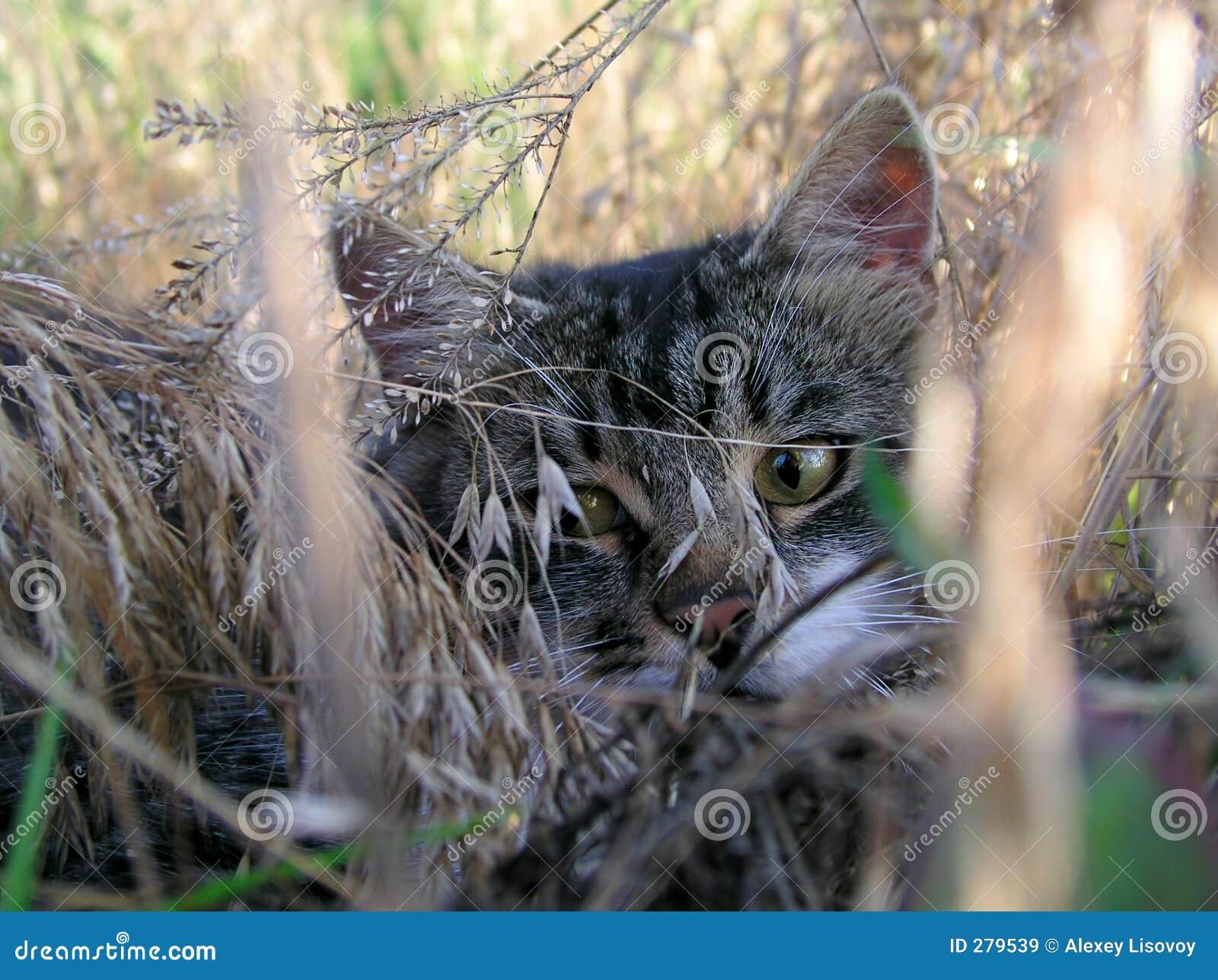 Katt 7