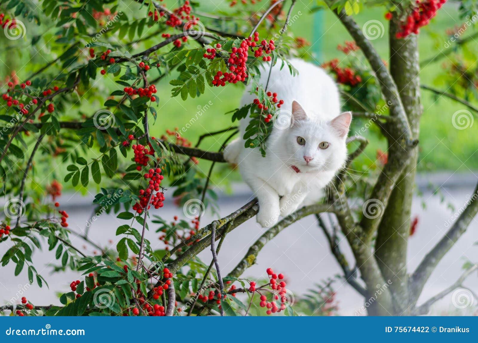 Katt husdjur, vit, kattdjur, gulligt som är ung, djur