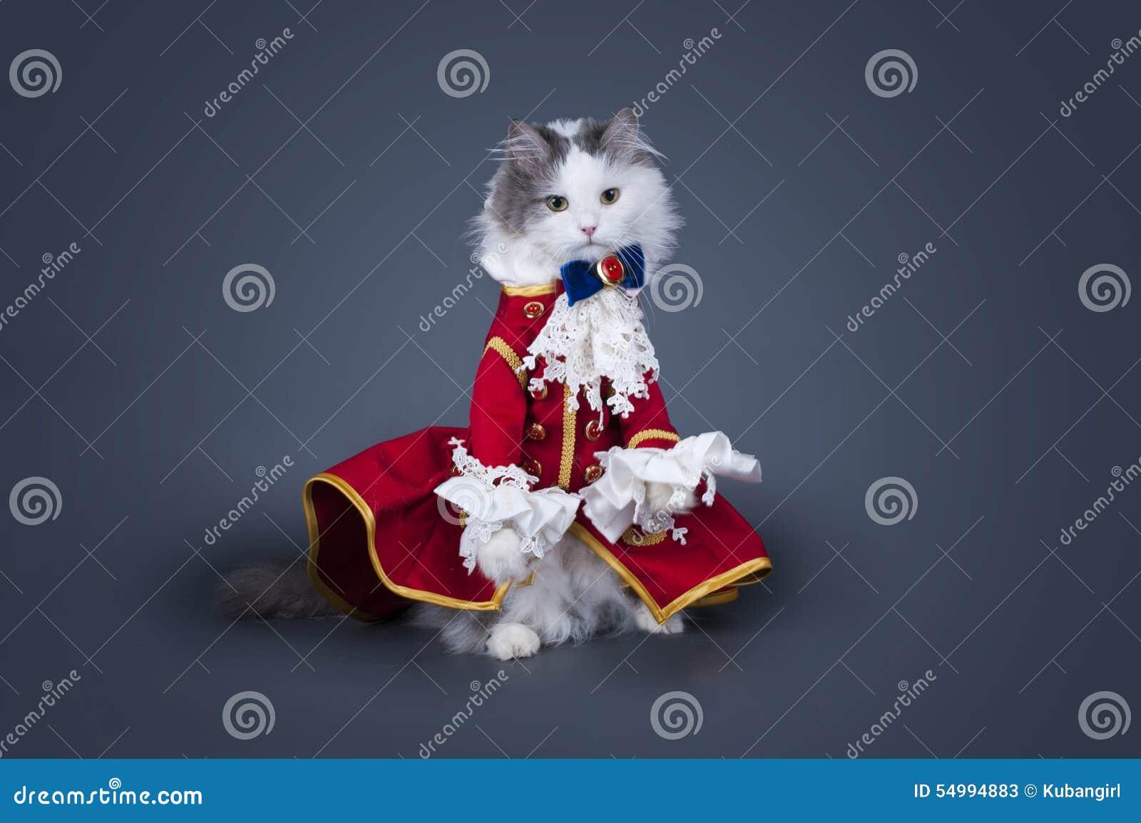 Katt i en dräkt av hertigen på en isolerad kulör bakgrund