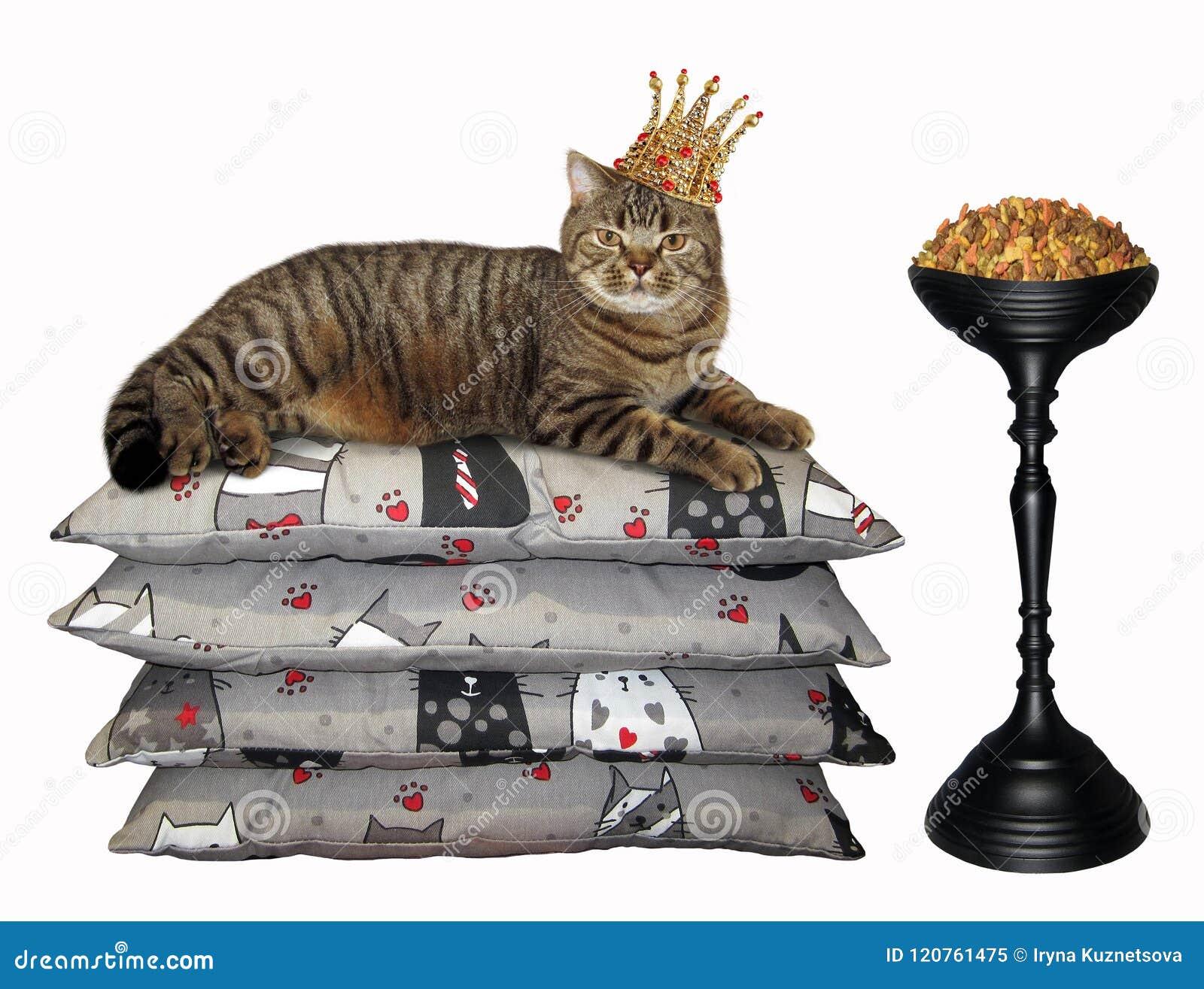 Katt i för krona den torra matningen nära