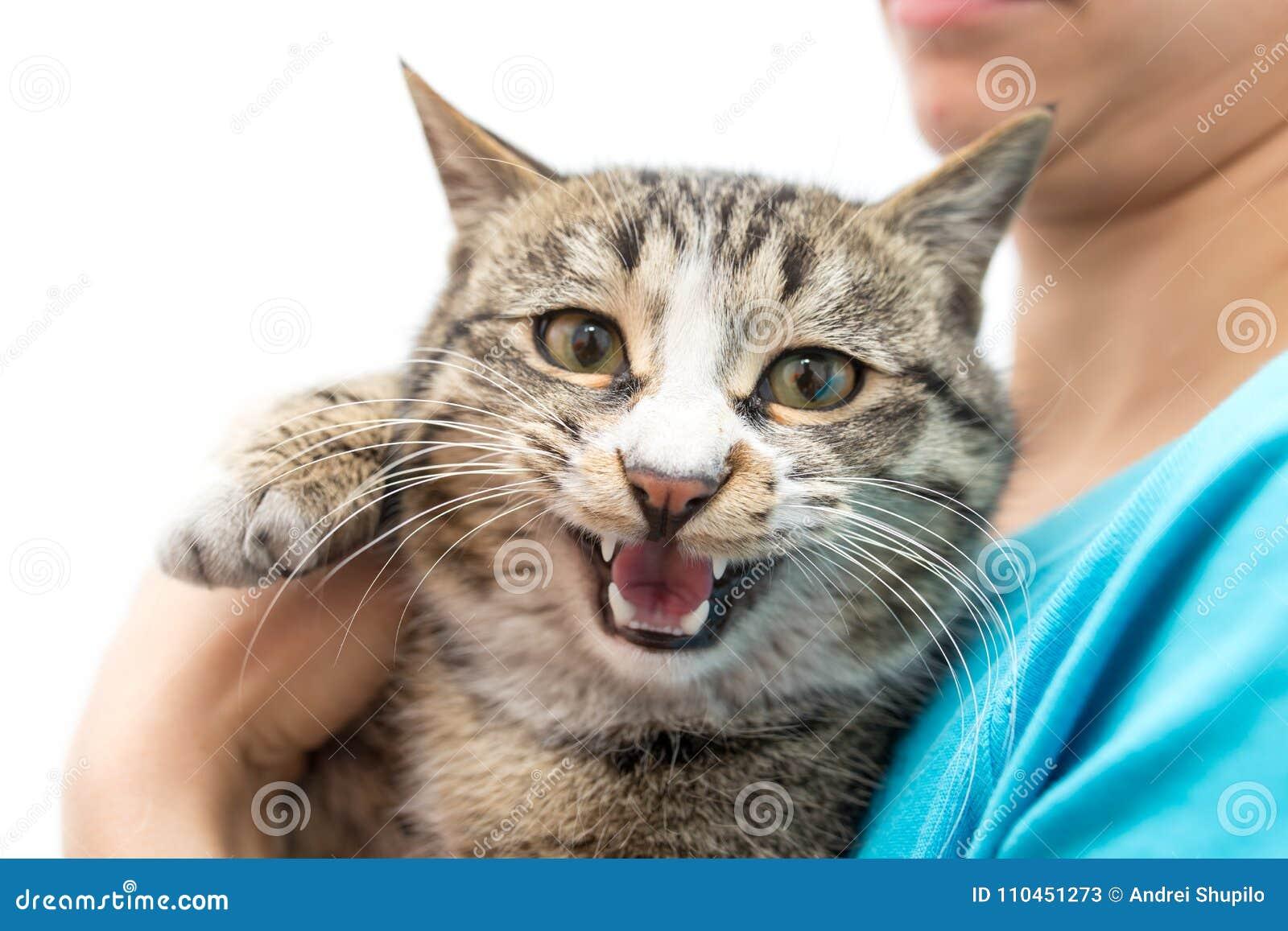Katt i händer på en vit bakgrund