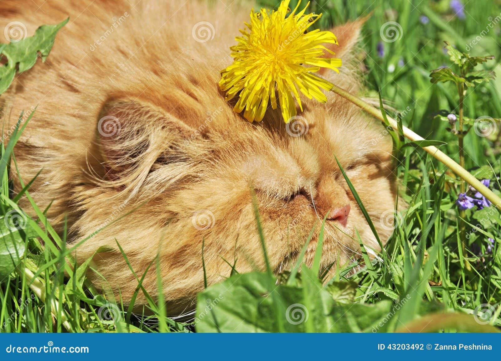 Download Katt i maskrosorna arkivfoto. Bild av upptäckt, stående - 43203492