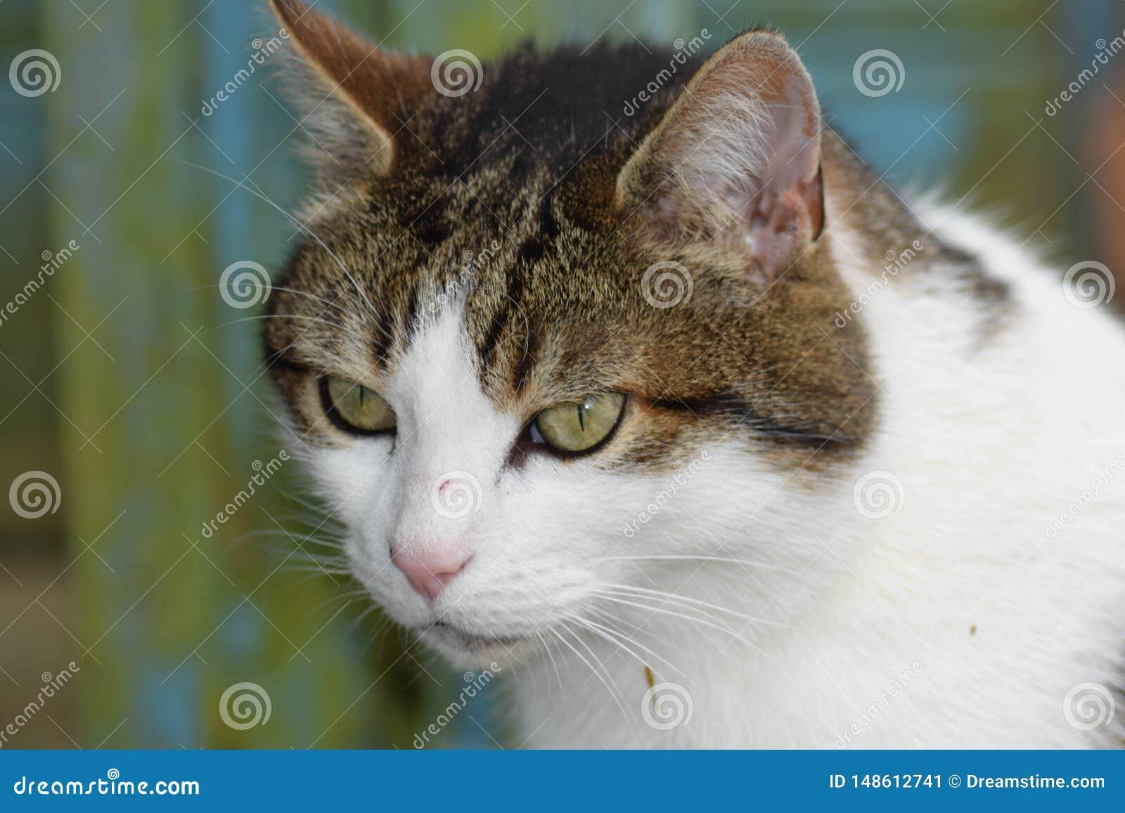 Katt i skottk?rra