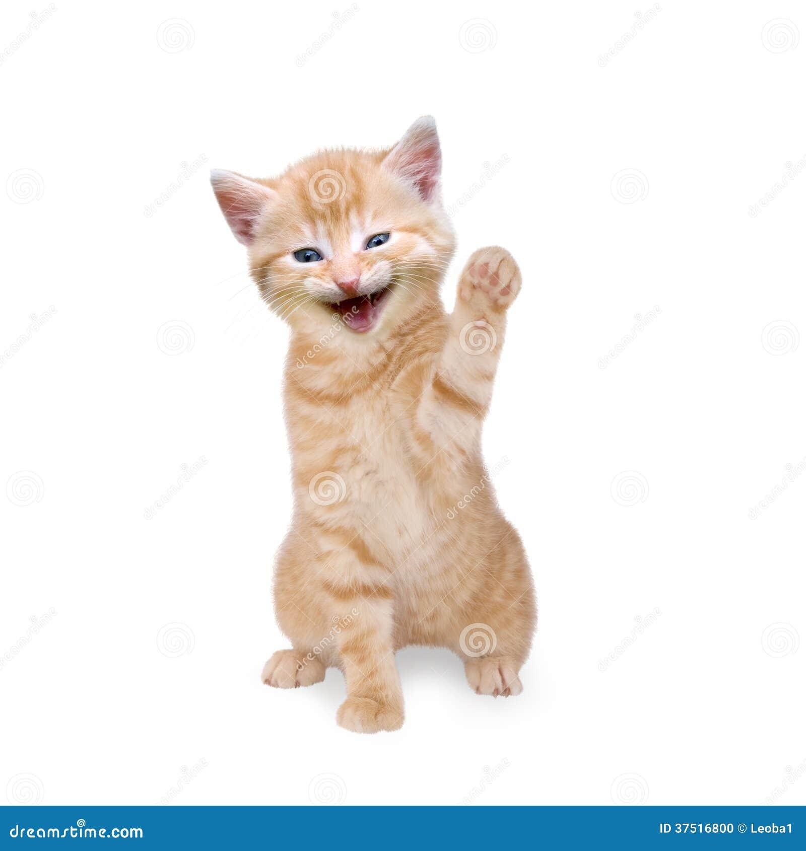 Cat Waving Goodbye Animation