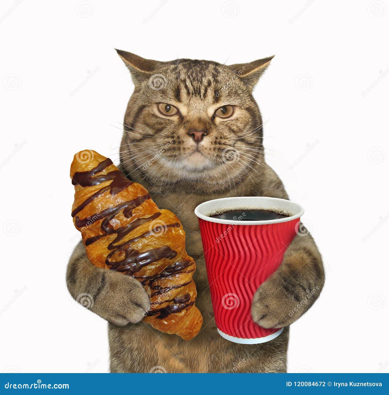 Katt med chokladbullen och kaffe