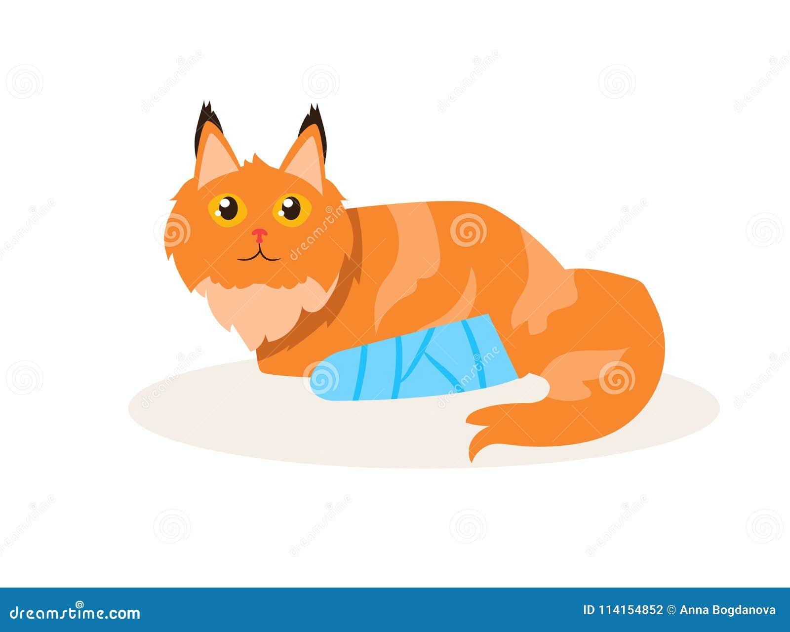 Katt med en benbrottvektor cartoon