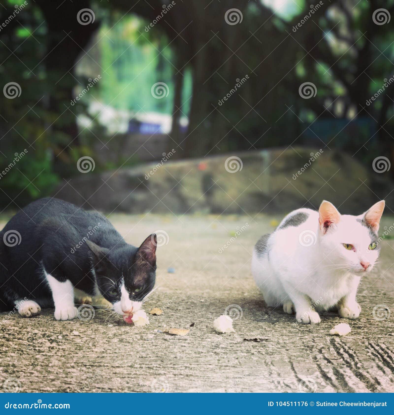 Katt och klibbiga ris
