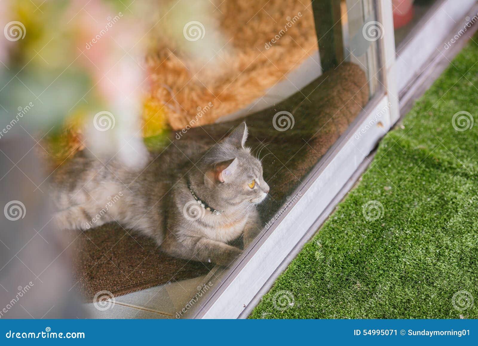 Katt på det klara glass fönstret