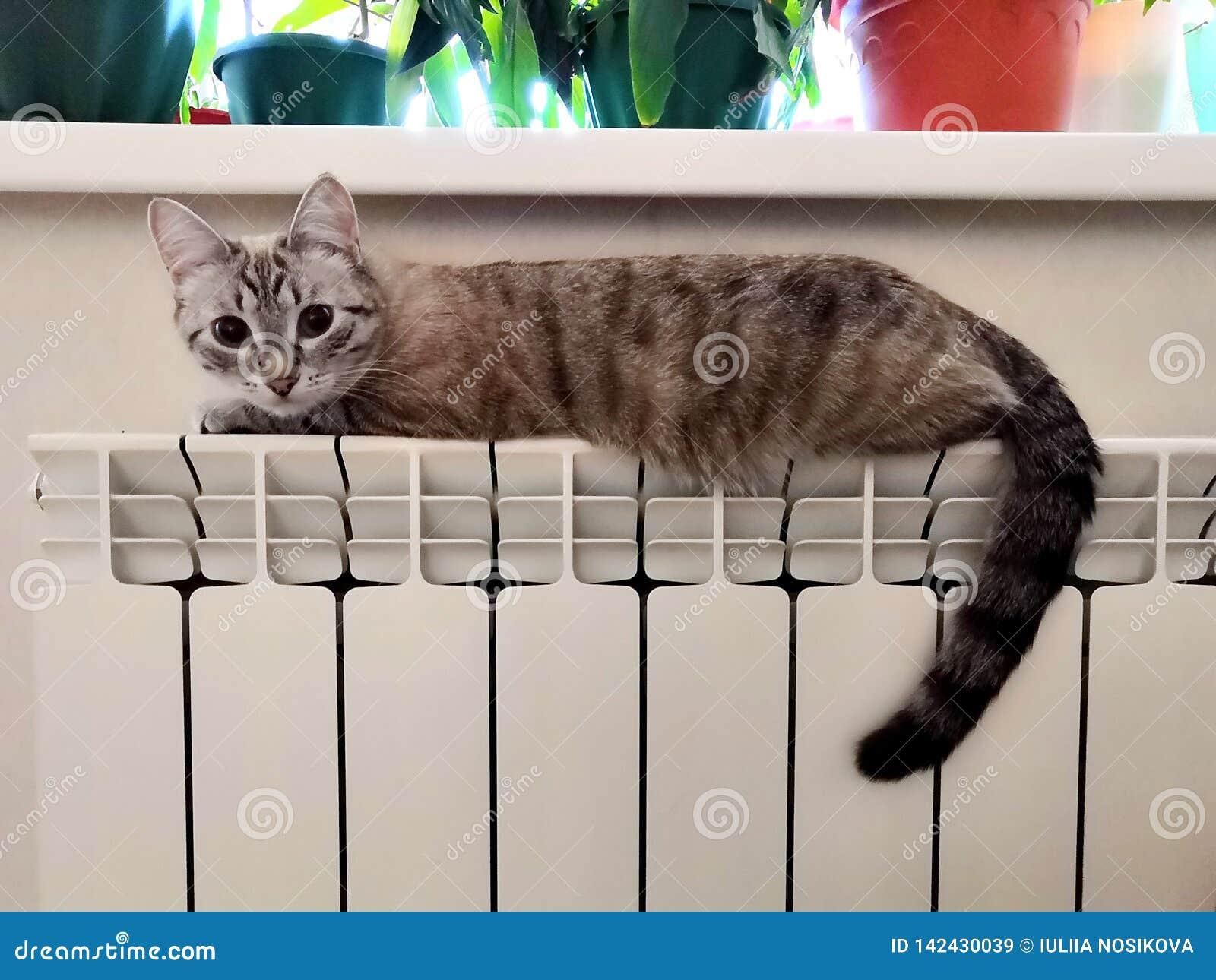 Katt på elementet