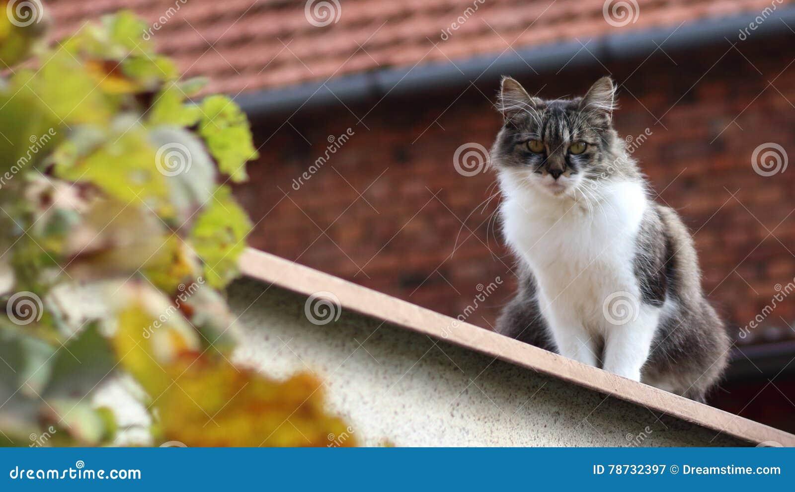 Katt på en vägg