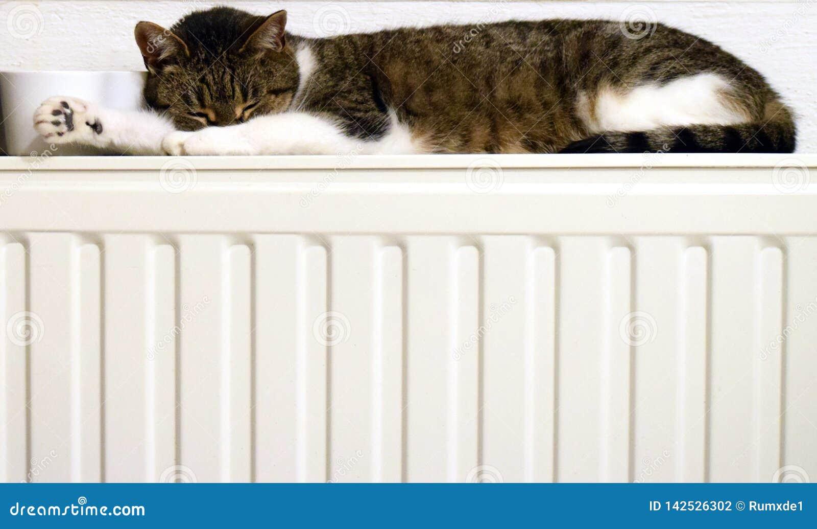 Katt på ett element