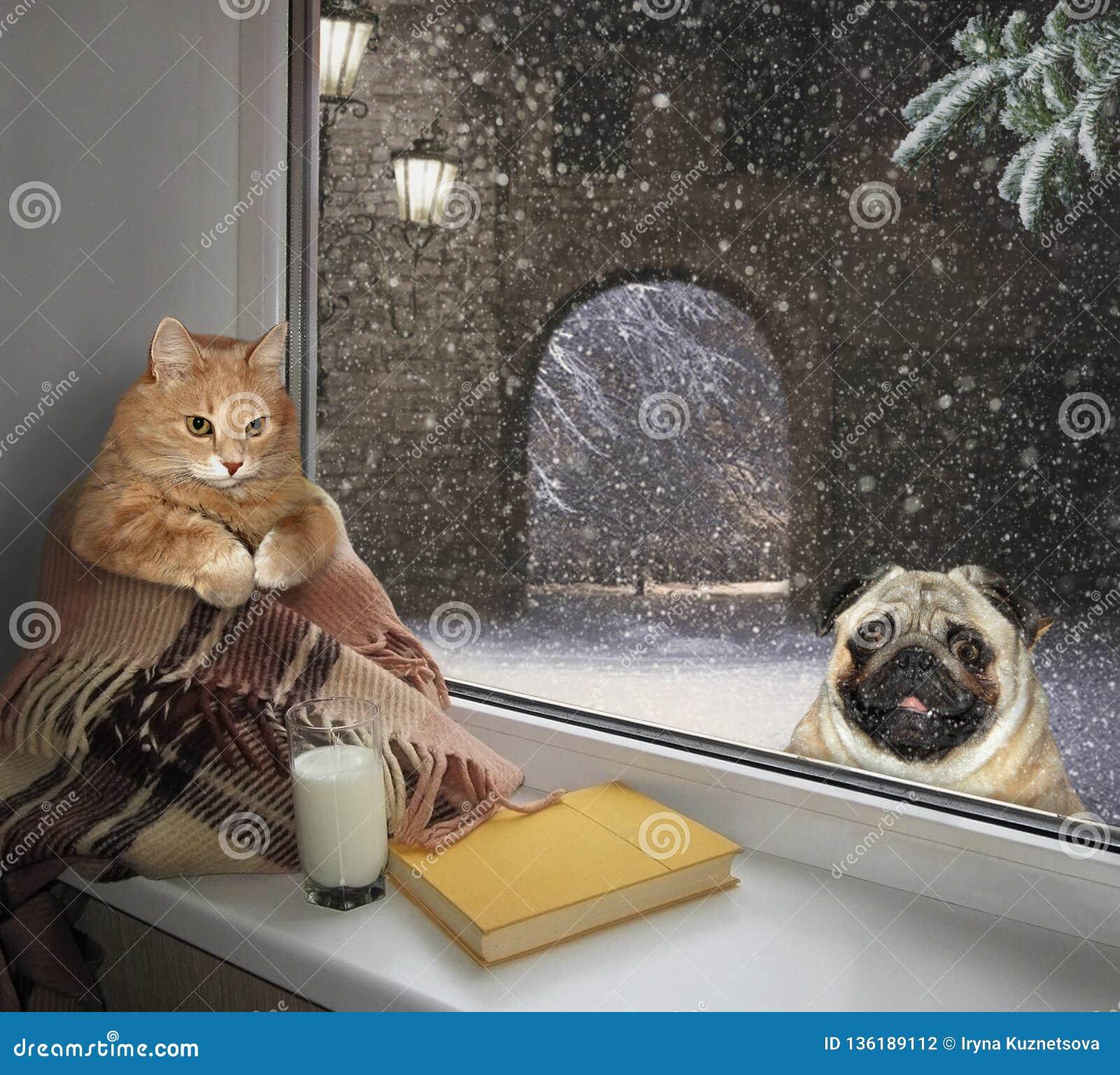 Katt på fönsterbrädan och en hund utanför