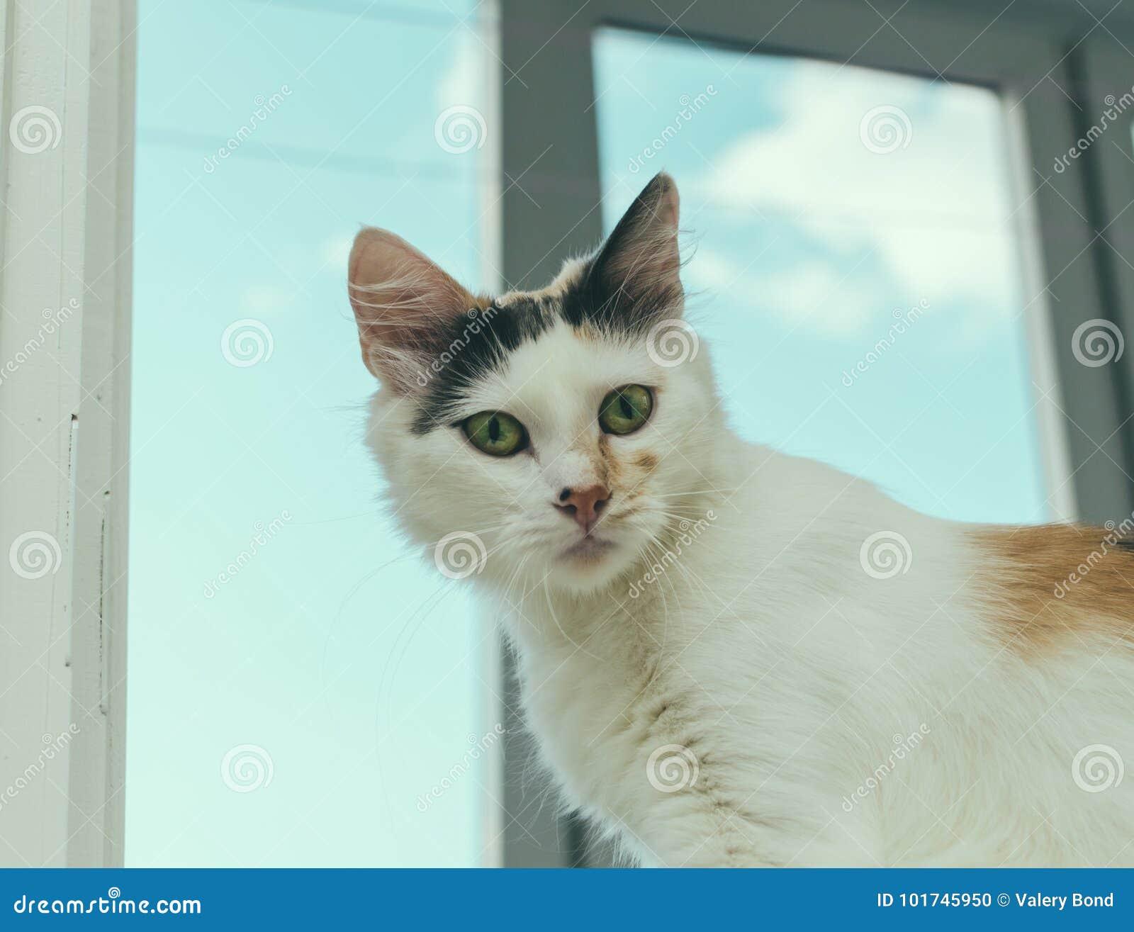 Katt på fönstret
