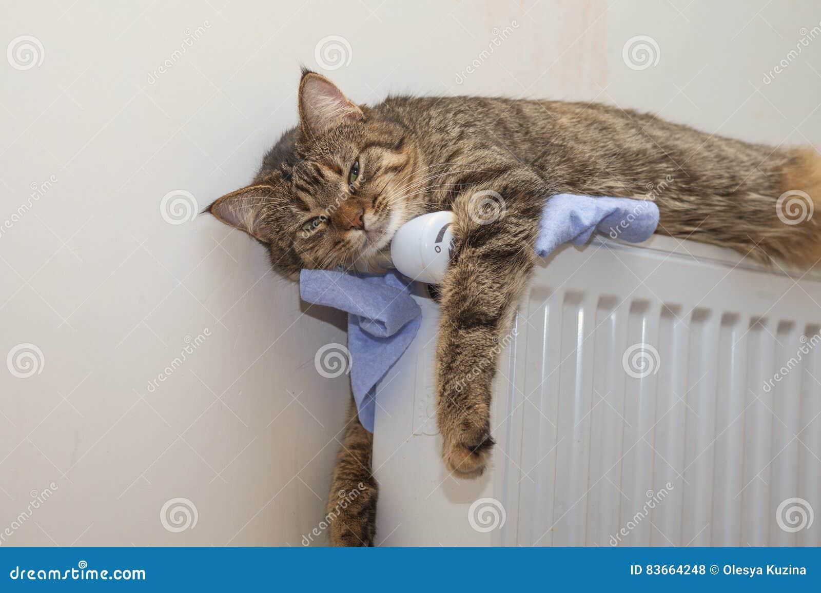 Katt som överst ligger av ett element som ser upp
