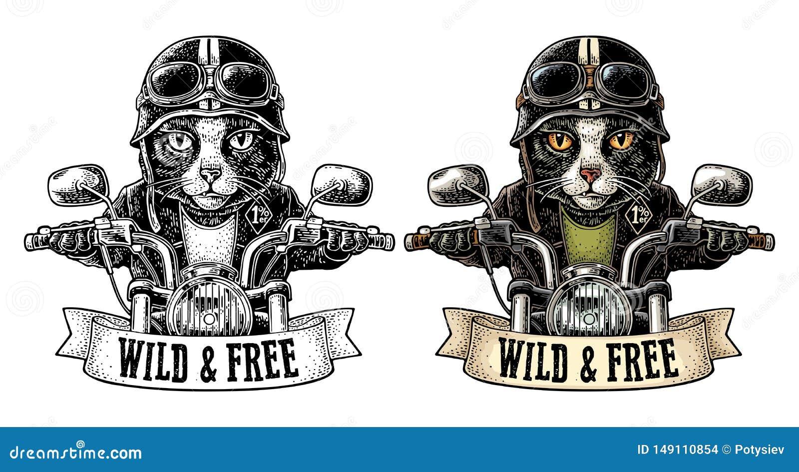 Katt som k?r ritter f?r en motorcykel Vektortappninggravyr