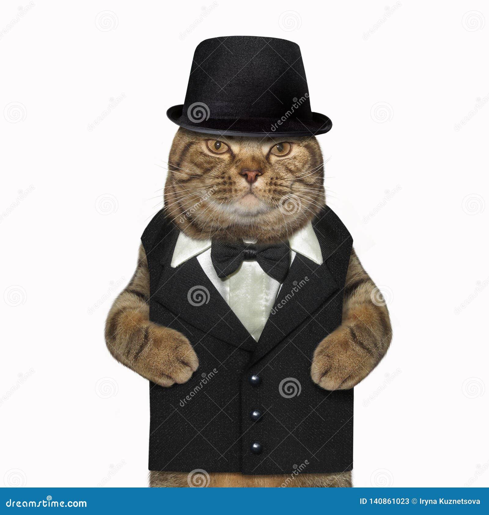 Katt som kläs som en gentleman