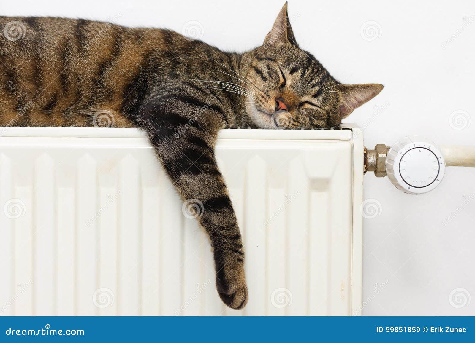 Katt som kopplar av på ett element