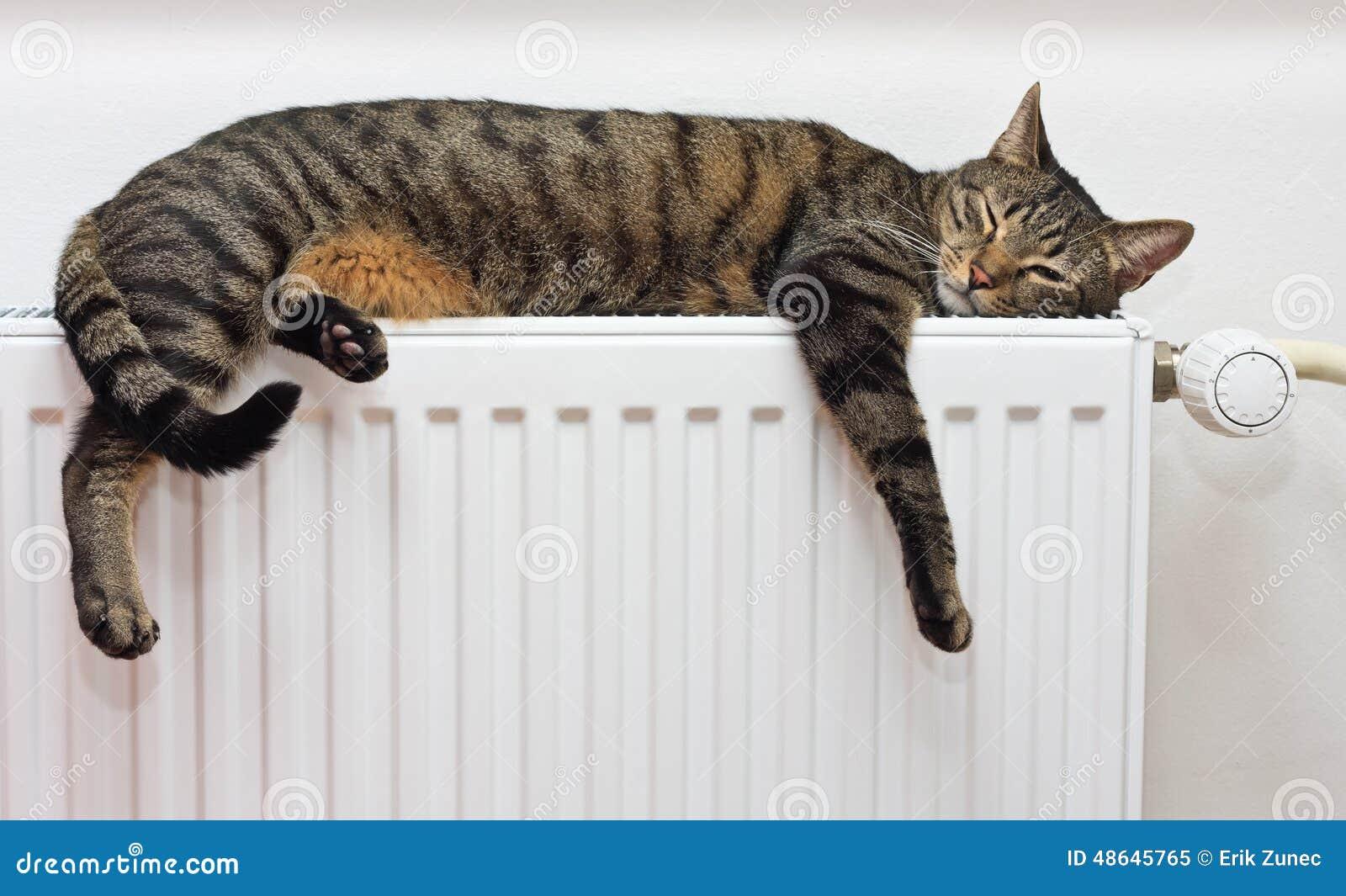 Katt som kopplar av på ett varmt element