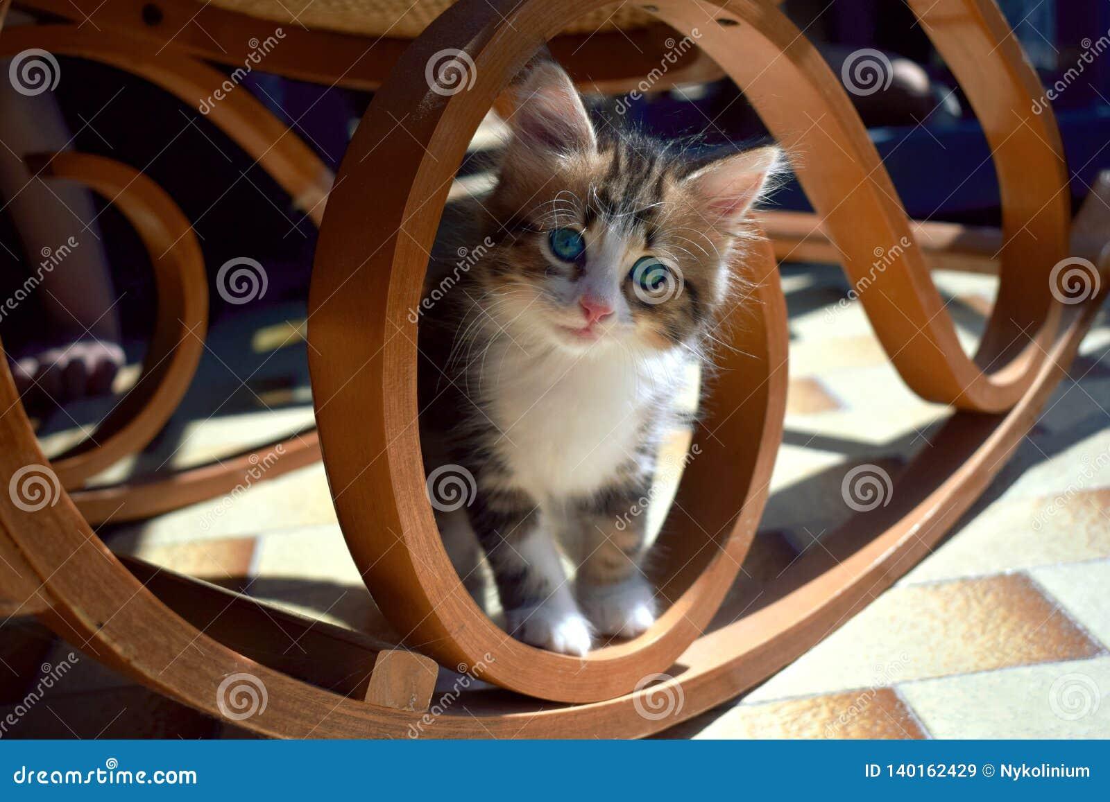 Katt under en gungstol
