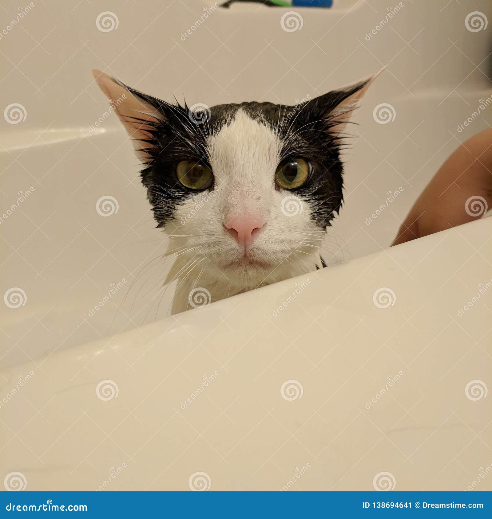 Kattbad