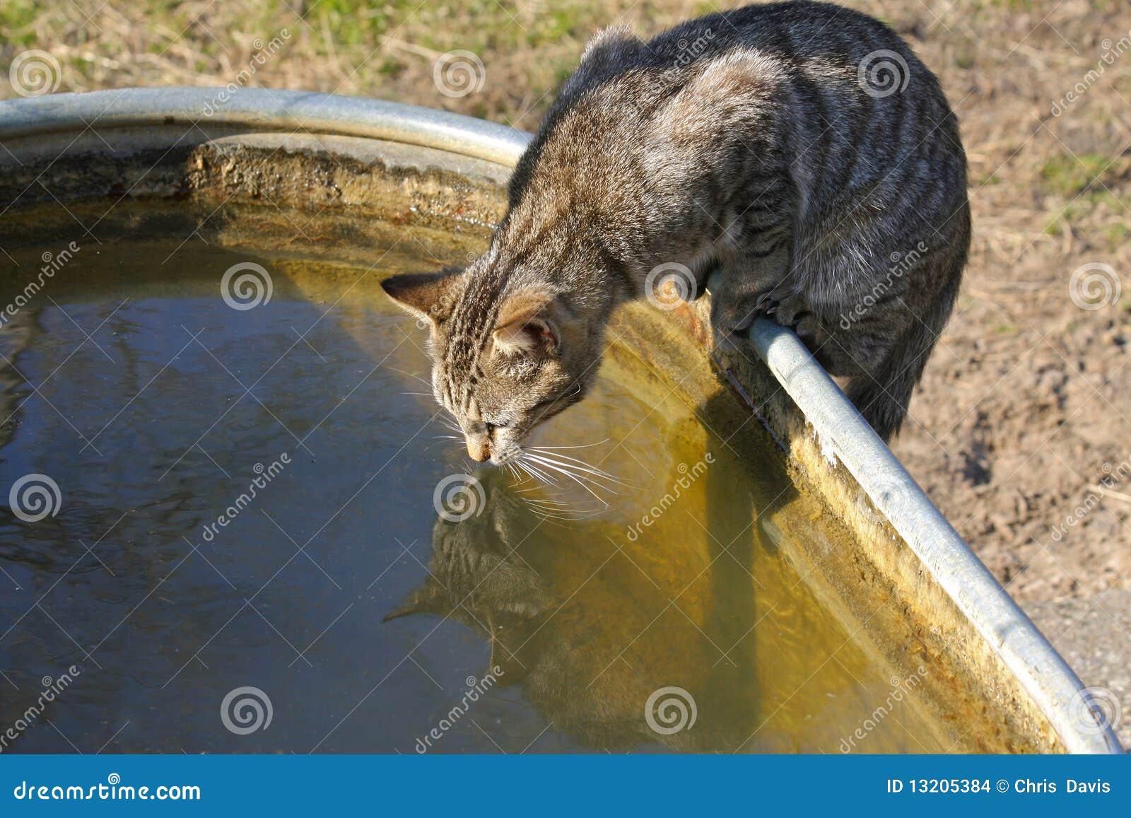 Kattdricksvatten
