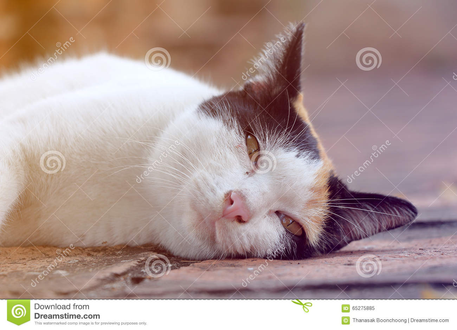 Katten är sömnig på jordningen