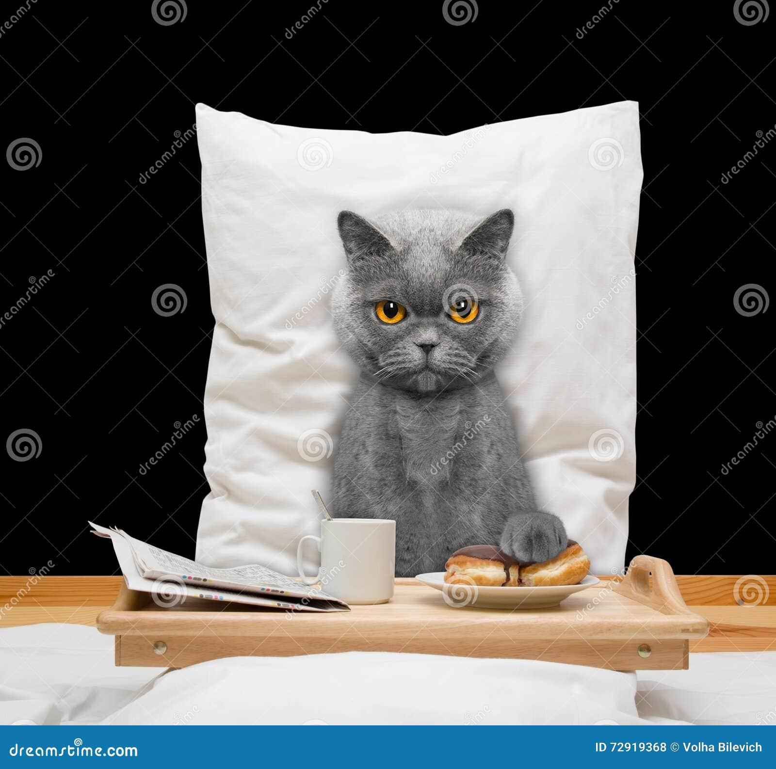 Katten äter i säng och drink