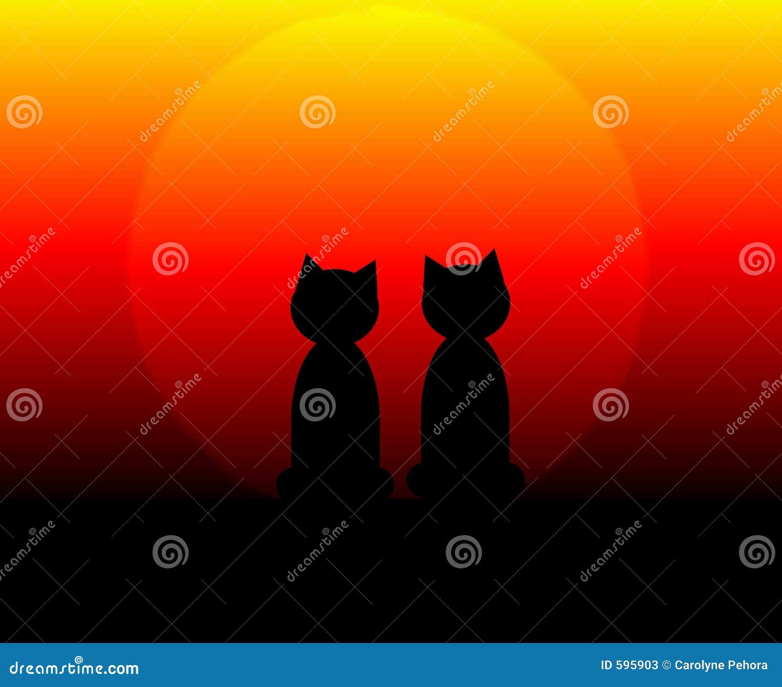 Katten bij Zonsondergang