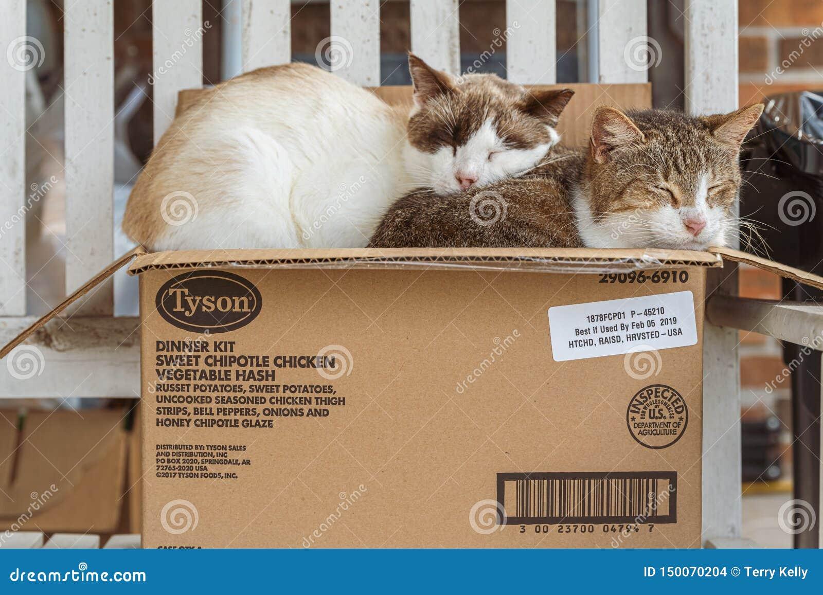 Katten in een doos
