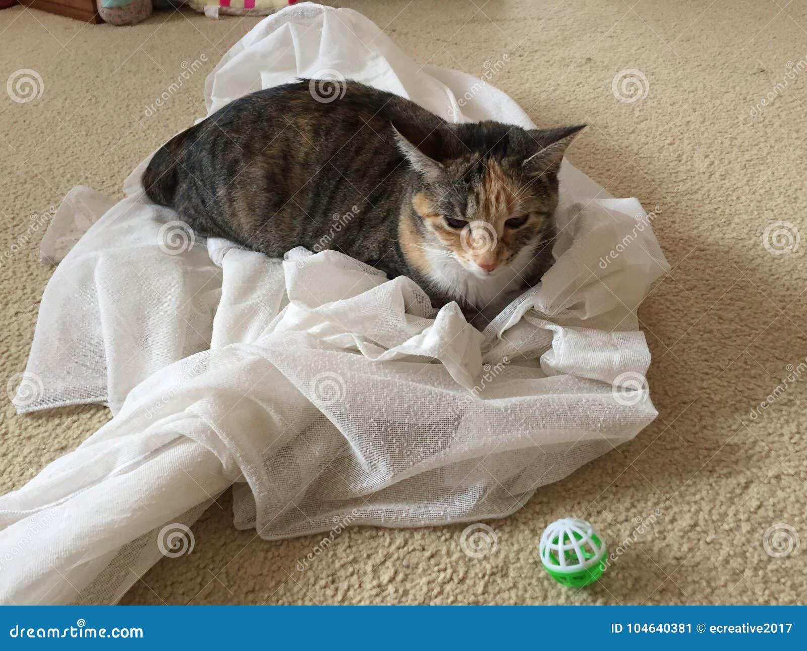 Download Katten En Nylon Gordijnen Binnenlands Ontwerp Stock Afbeelding - Afbeelding bestaande uit ontwerp, katten: 104640381