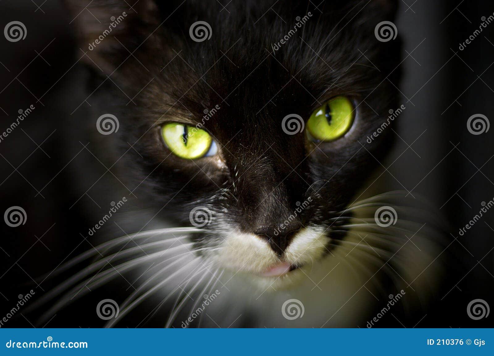 Katten eyes ursnygg green