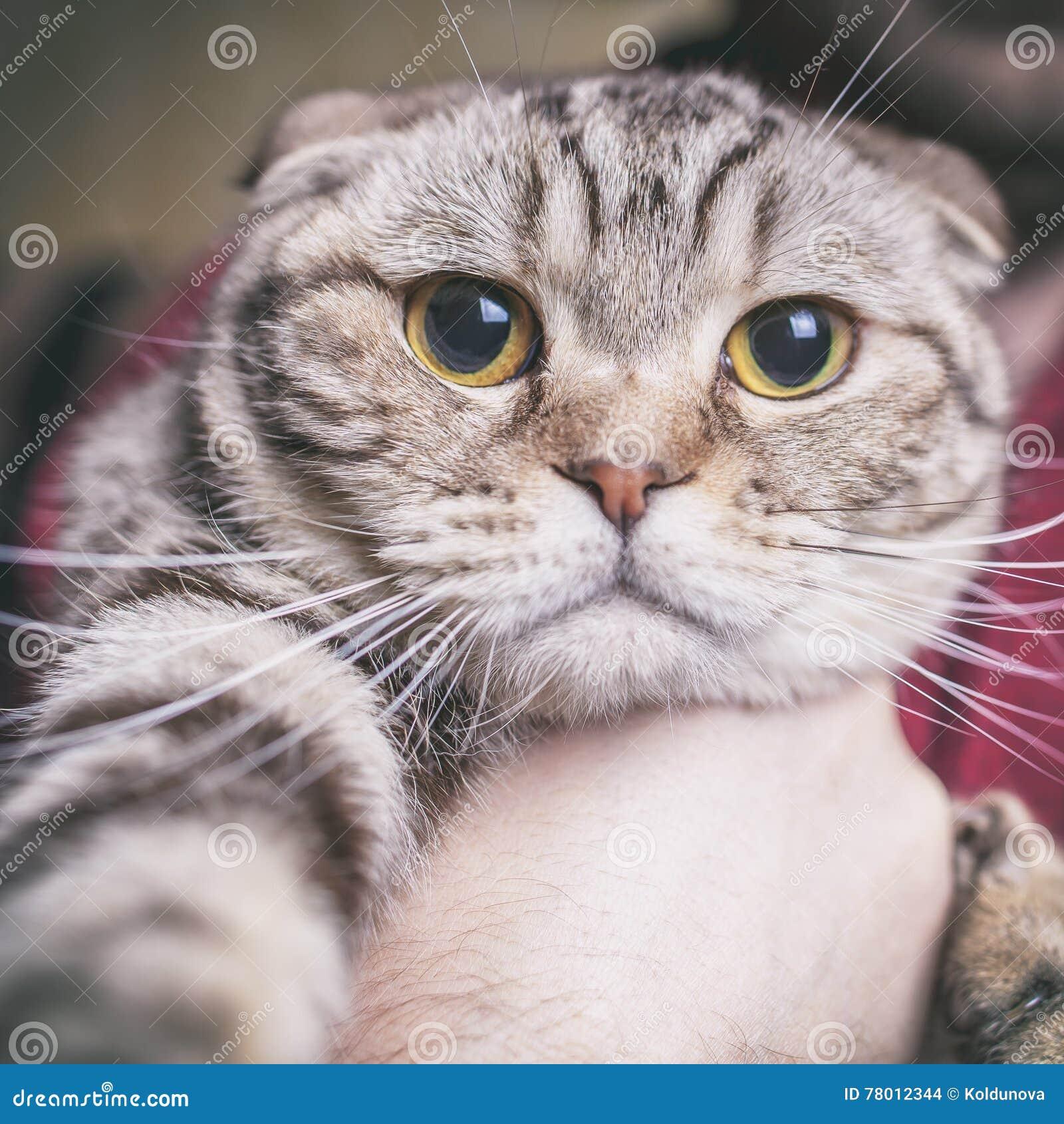Katten gör selfie