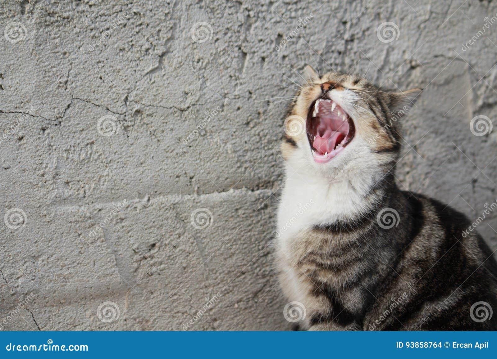 Katten gråter